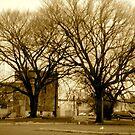 Double Tree by Jamie Tucker
