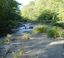 The Lackawanna River by Pamela O'Pecko