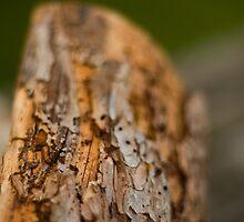 Log by Ed Stone