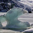 Hooker Lake icebergs by Charles Kosina