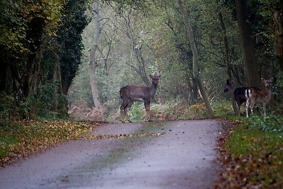 Deer by Ed Stone