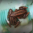 Froggies Chillin by Vicki Childs