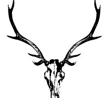Red Stag Skull and Antlers by huntandhound