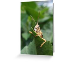 DON'T TOUCH MY LEAF. Greeting Card