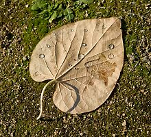 leaf with drops by fine