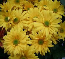 Flower Power Yellow! by Linda Jackson