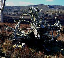 photoj Tree Roots by photoj