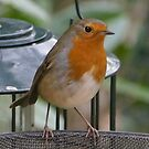 Among the metalwork - Robin by Rivendell7