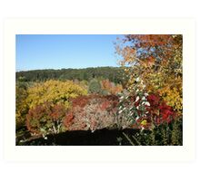 Autumn colours. Art Print