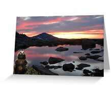 985-Grizzly Dusk Greeting Card