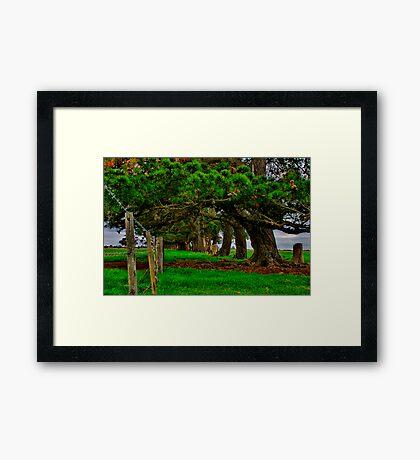 """""""Along the Fenceline"""" Framed Print"""