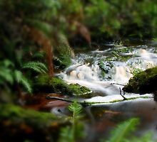 Little Tarkine Rapids by Rhana Griffin