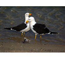 Pacific Gulls 1 Photographic Print