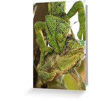 Chameleon Battle Greeting Card