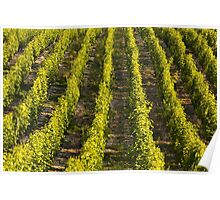 Sancerre Vineyards Poster