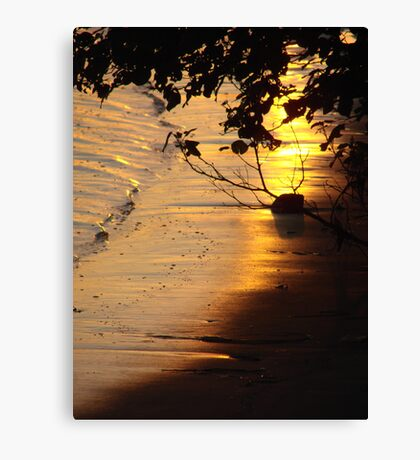 Afternoon Glow Canvas Print