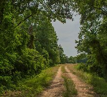 On A Country Road by Susan Nixon