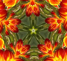 Tulips by Elaine Teague