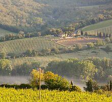 Chianti Vineyards by Julian Elliott