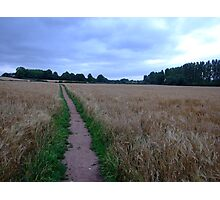 Fields of Gold  Photographic Print