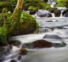 Arthog Waterfalls by Steve Green