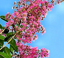 Crepe Myrtle Blooms by Marcella Babineaux