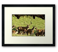 They are all mine - Red Deer. Framed Print