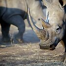 A primeval throw back by Wild at Heart Namibia