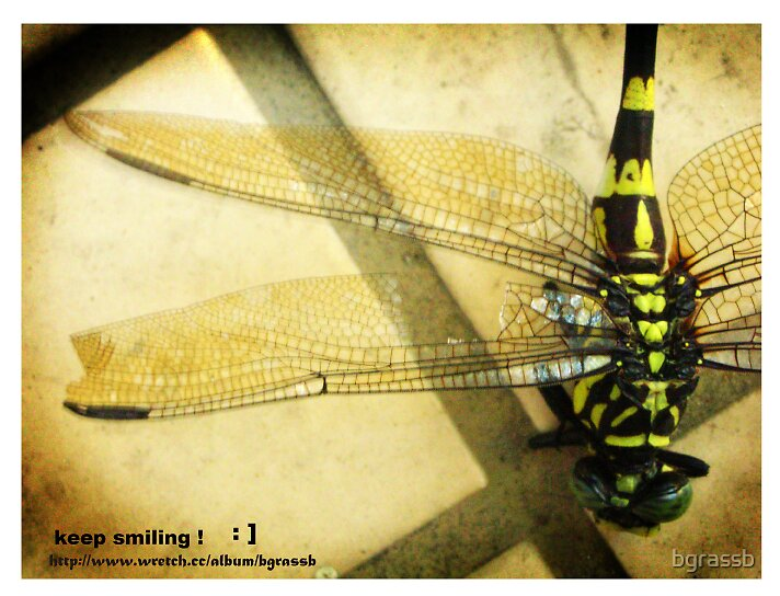 dragonfly  by bgrassb