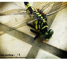 dragonfly 2 by bgrassb