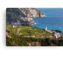 Cinque Terre vineyards Canvas Print