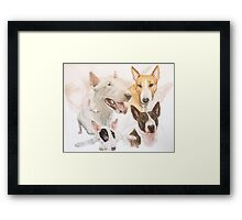 Bull Terrier /Ghost Framed Print