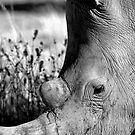 Rhino in Damaraland by Wild at Heart Namibia