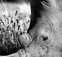 Rhino in Damaraland by Wild at Heart Namibia