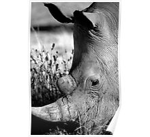 Rhino in Damaraland Poster