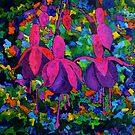 Fuschia flowers by calimero