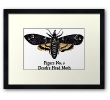 Death's Head Moth Framed Print