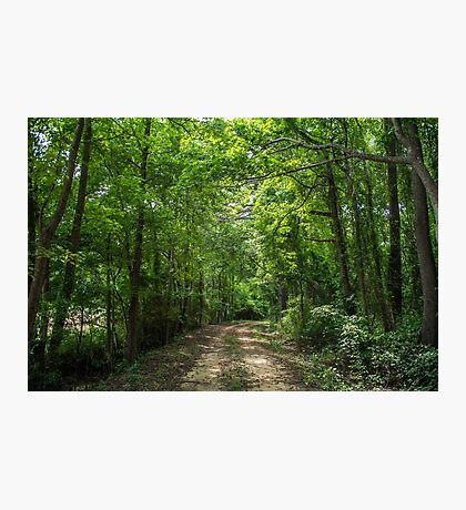 Forest Cool Photographic Print