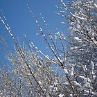 Snow on trees 2 by Dreamcraft