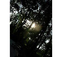 Through the Trees Photographic Print