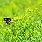 Monarch In The Meadow by SRowe Art