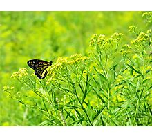 Monarch In The Meadow Photographic Print