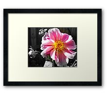 Lit Petals  Framed Print