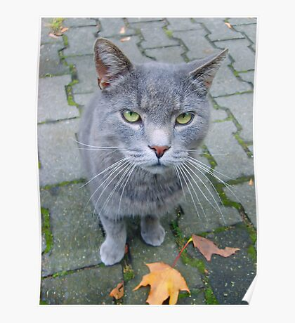 Autumn cat... Poster