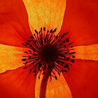 Inside the poppy... by Nuh Sarche