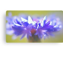 - Purple Crown - Canvas Print