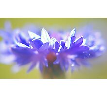 - Purple Crown - Photographic Print