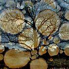 Spirit Of A Tree by Jo Nijenhuis