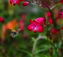 Penstemon and Bee in Flight - Fractalius by grezmel