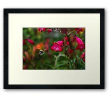 Penstemon and Bee in Flight - Fractalius Framed Print